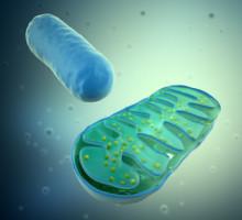mitocondria4Depositphotos_8021841_XS