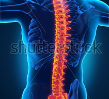 COLUNAstock-photo-human-male-spine-anatomy-136616474